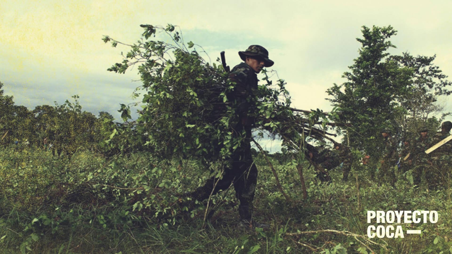 Tumaco, capital mundial de la coca: 5 razones del problema