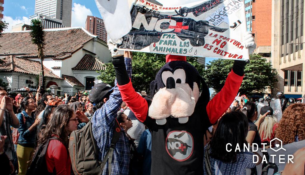 Espectáculos con animales que aún existen en Colombia: ¿qué dicen los candidatos?v
