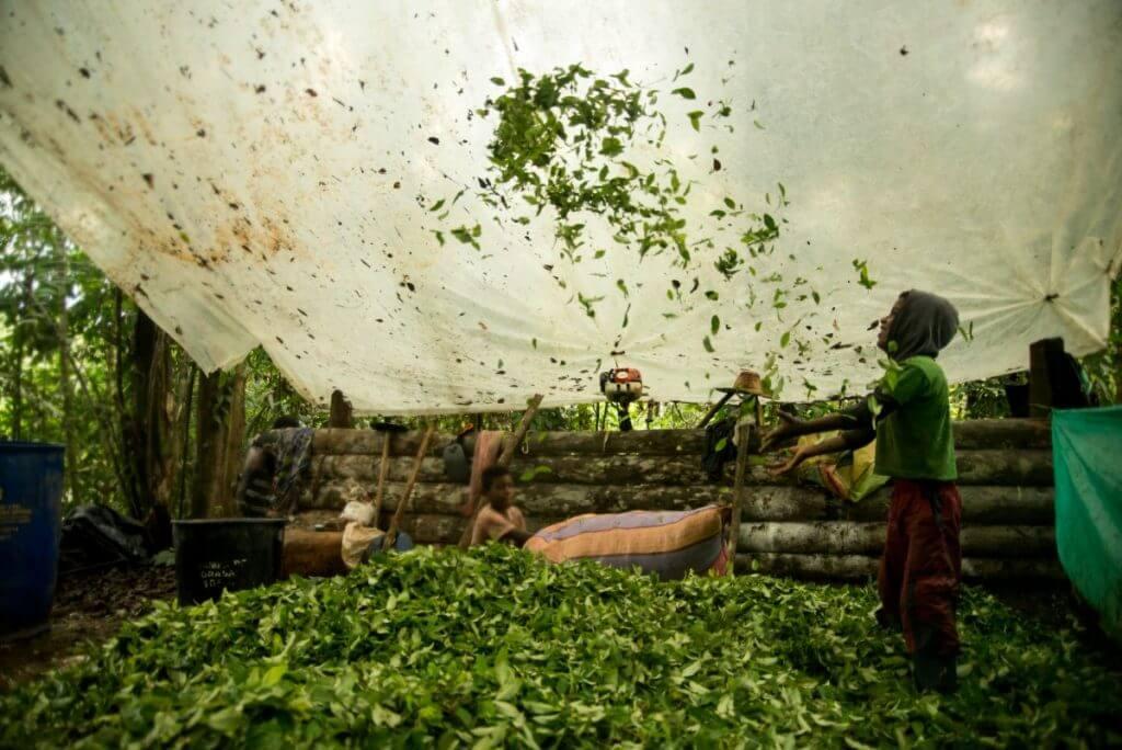 Las cifras de la coca y la cocaína en Colombia se volvieron a disparar