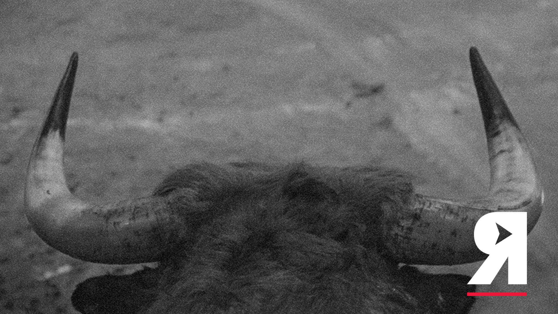 La guía Divergentes del movimiento animalista colombiano