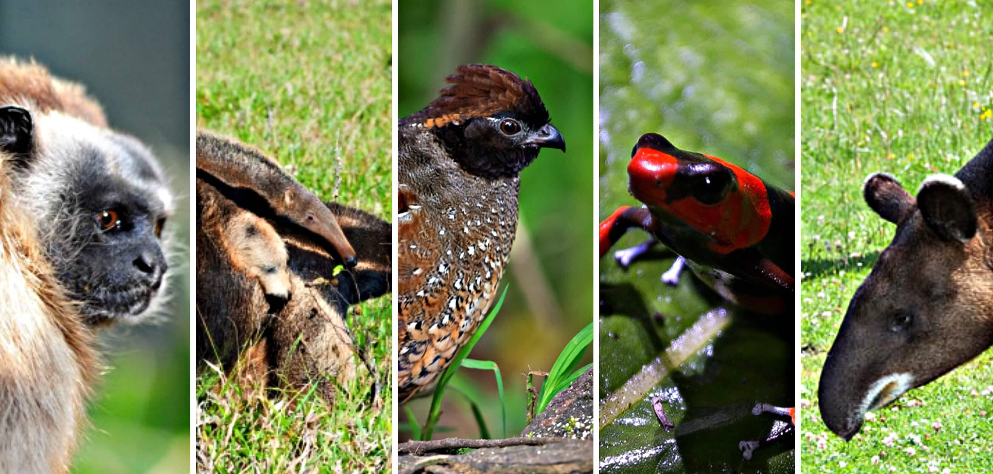 Cinco animales que conviven con el conflicto armado