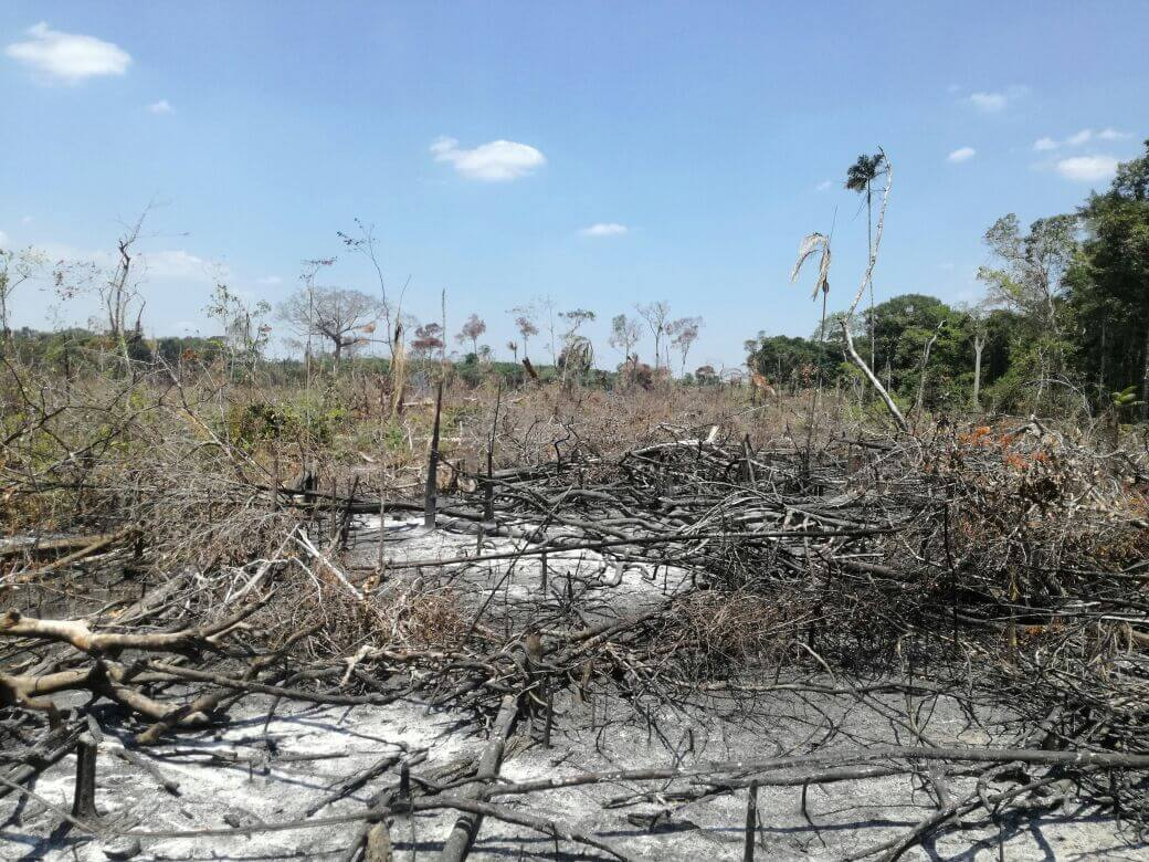 Así acaban con la selva en la Amazonía tras la salida de las Farc