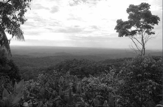 Petróleo y coca: así funcionó (y funciona) el destierro en Putumayo