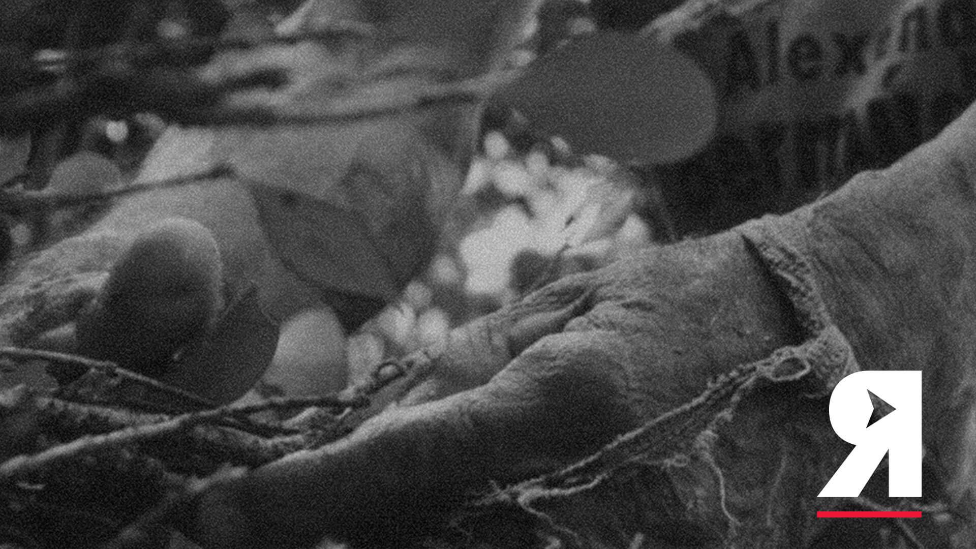 La guía Divergentes de la lucha de los cocaleros en Colombia