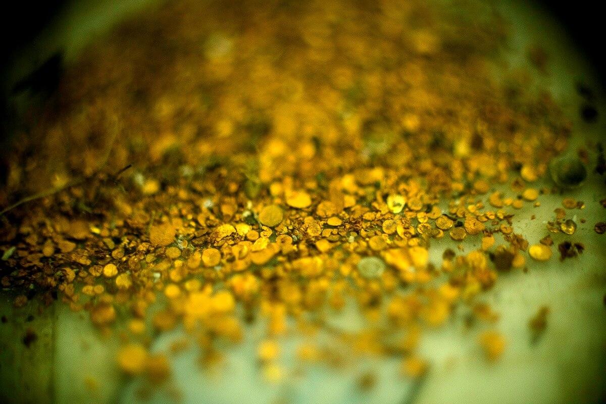 Investigación: ¿De qué color es el oro de Giraldo y Duque Ltda.?
