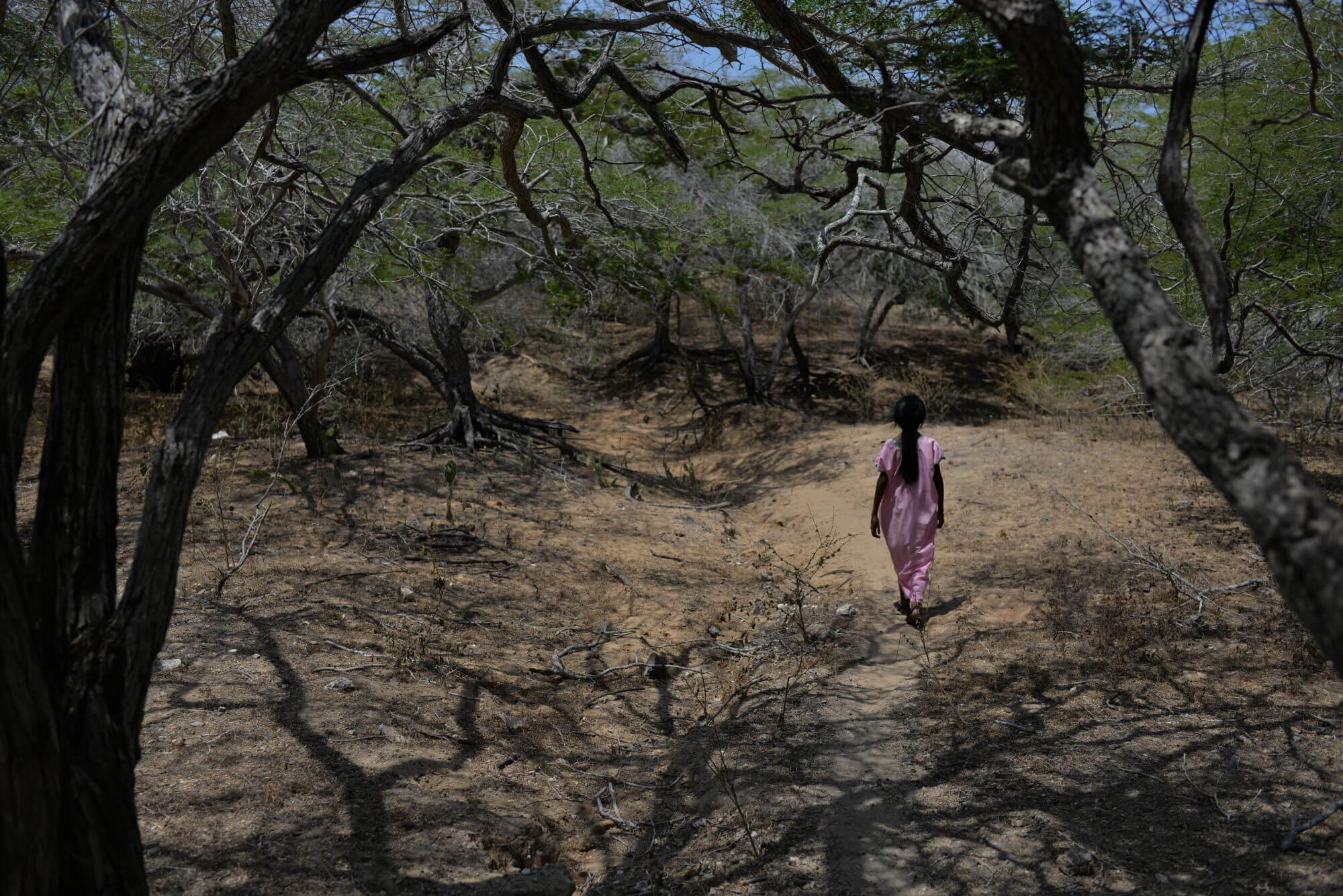 La sentencia que asegura derechos fundamentales para los niños wayúu