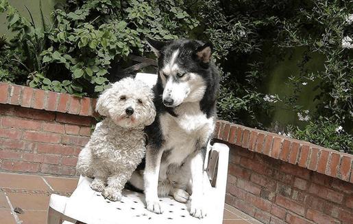 Rapanui y la 'Niña Ceci', los perros de la paz