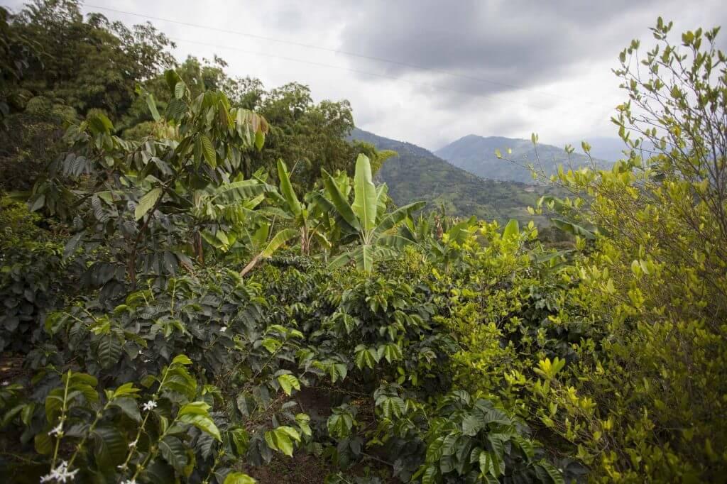 #CaravanaPacifista Postal del Norte del Cauca: dos Colombias, dos promesas