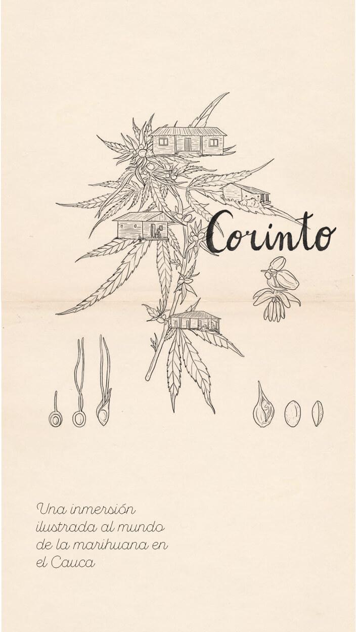 Una inmersión ilustrada al mundo de la marihuana en el Cauca