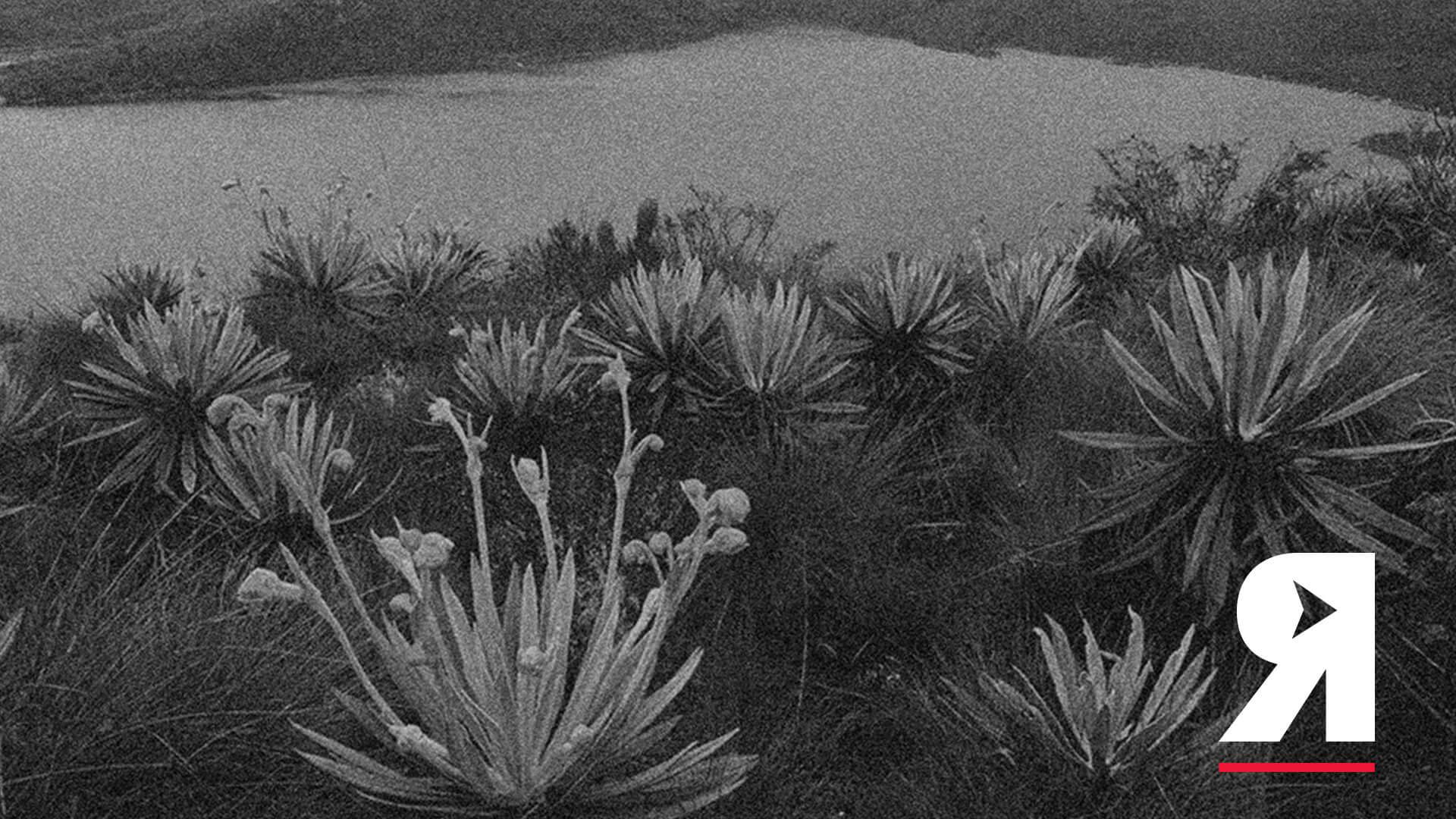 La guía Divergentes del movimiento ambientalista colombiano