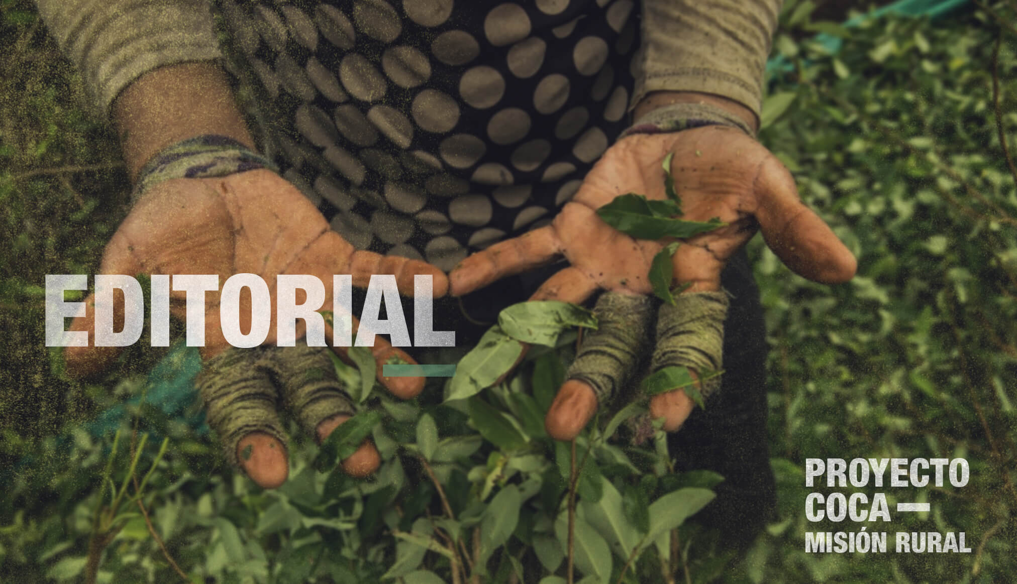 EDITORIAL | Proyecto COCA: un drama local, una guerra global
