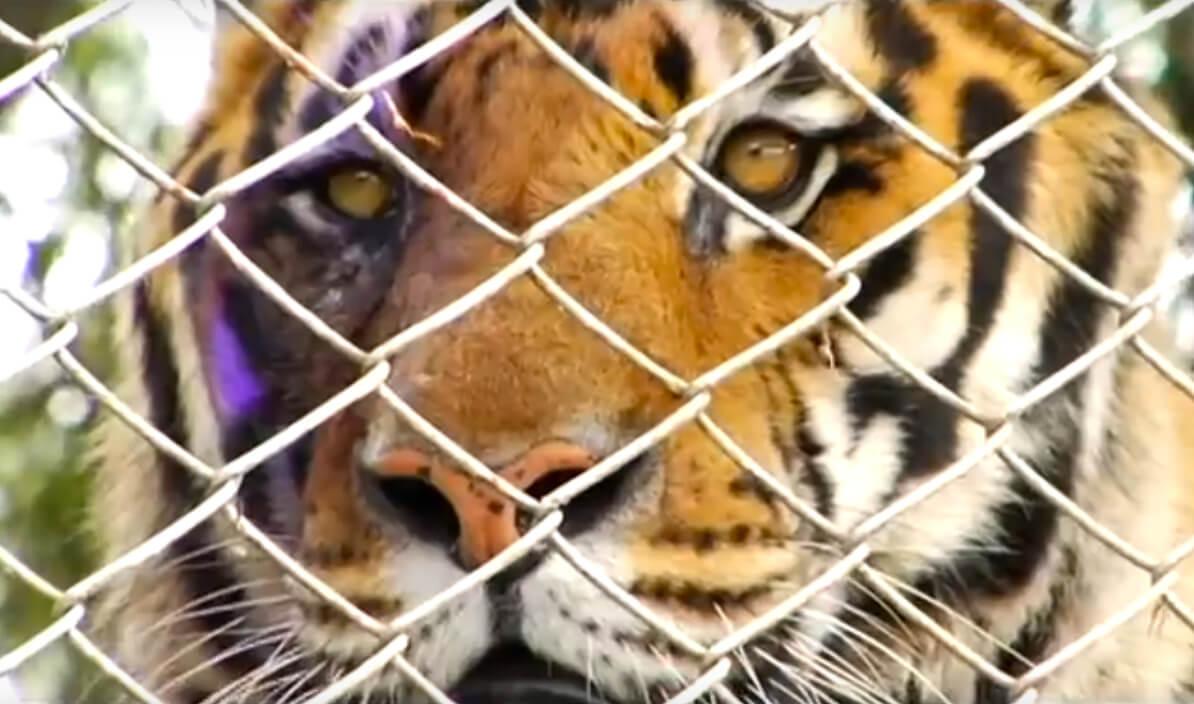 Siete animales salvados en Cali: internet los libró de la eutanasia