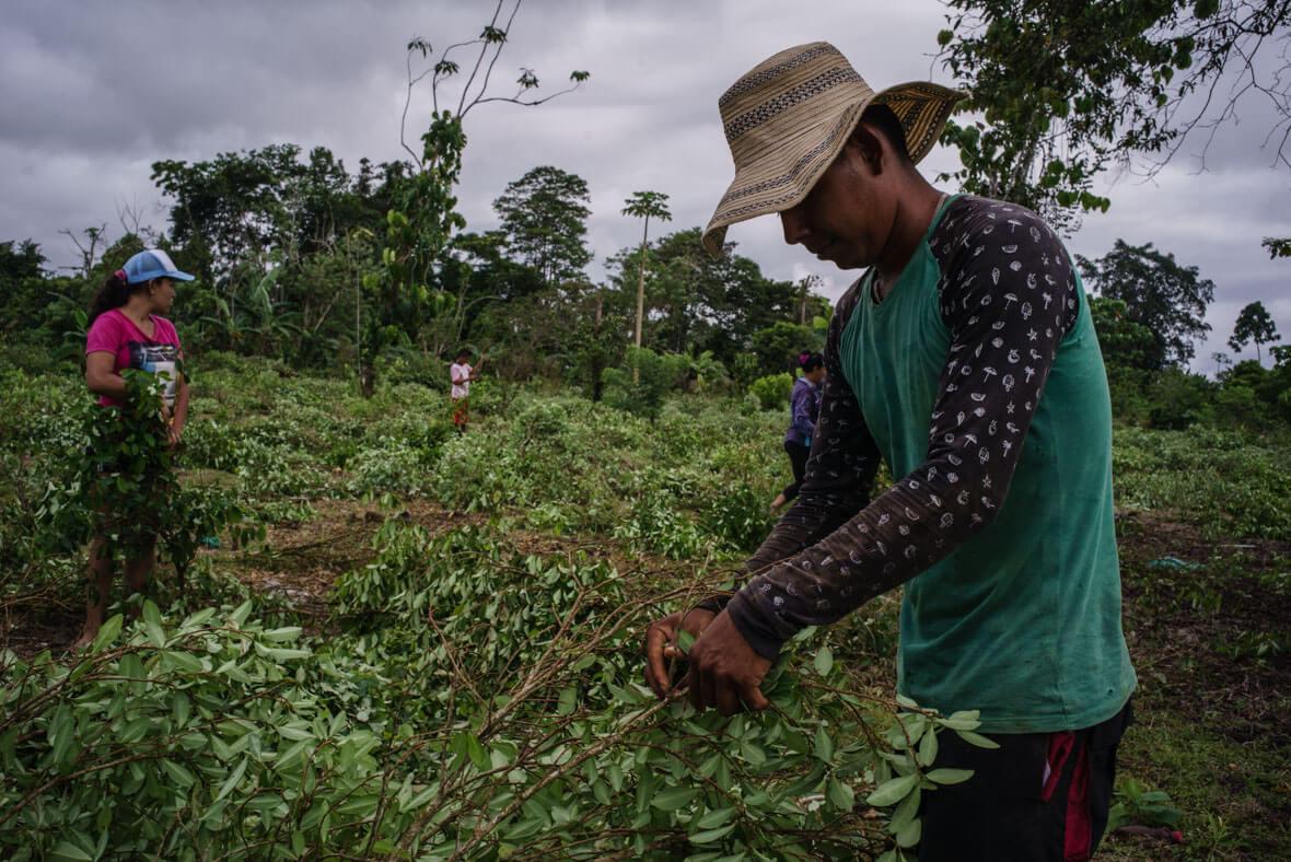 El fracaso de la sustitución de cultivos en Tumaco