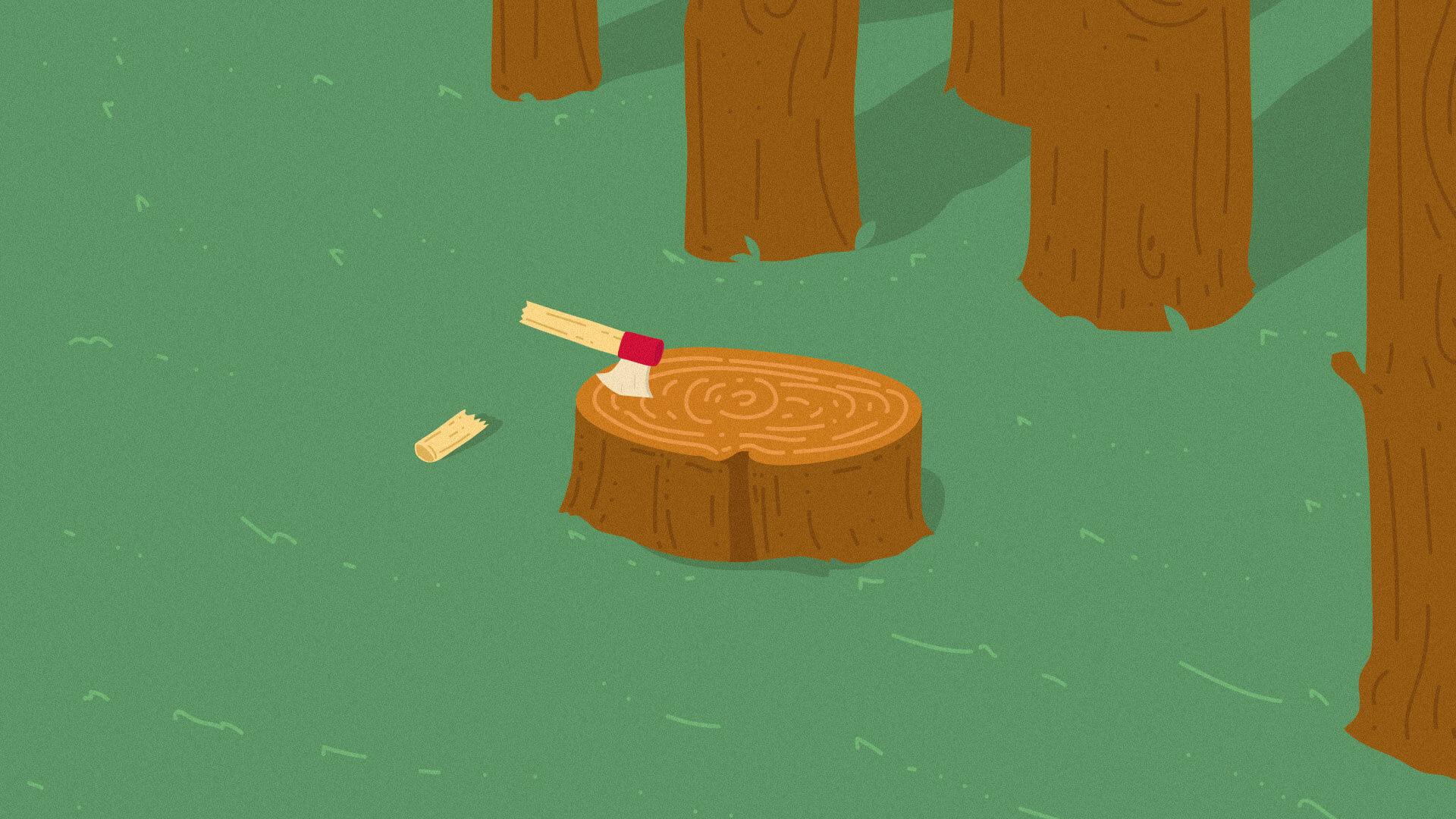 ¿Cuándo podremos vivir de los bosques sin talarlos?