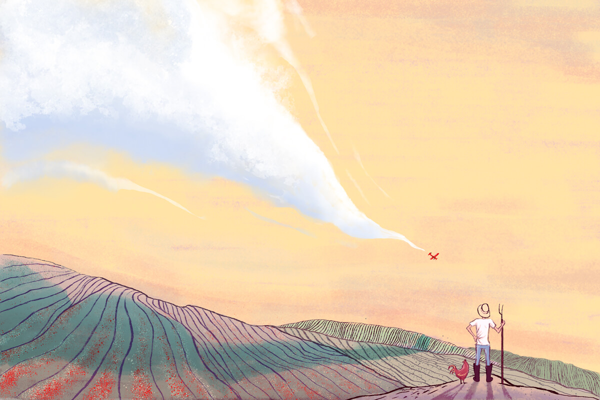 Glosario ¡Pacifista!: cultivos ilícitos