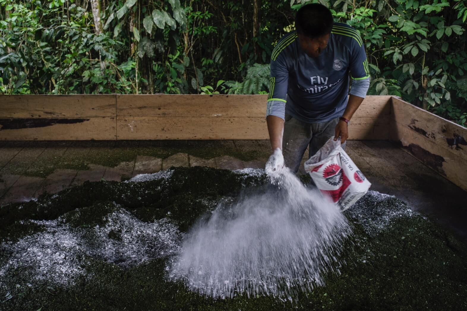 Comunidades afro: las víctimas invisibles de la coca en Tumaco