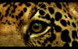 ¡Pacifista! presenta: El corredor del jaguar