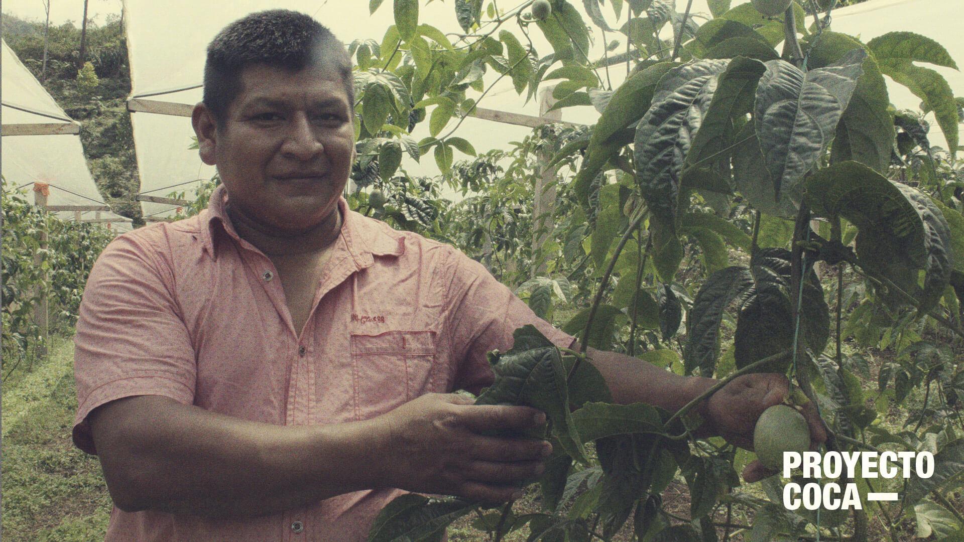 Gulupa: la fruta que puede ganarle a la coca y por la que nadie daba un peso