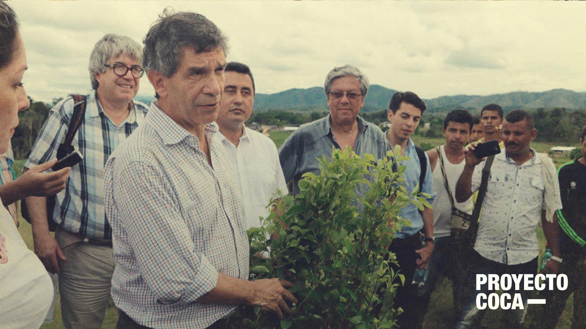 Más erradicación voluntaria de coca que sustitución: el adiós del gobierno Santos