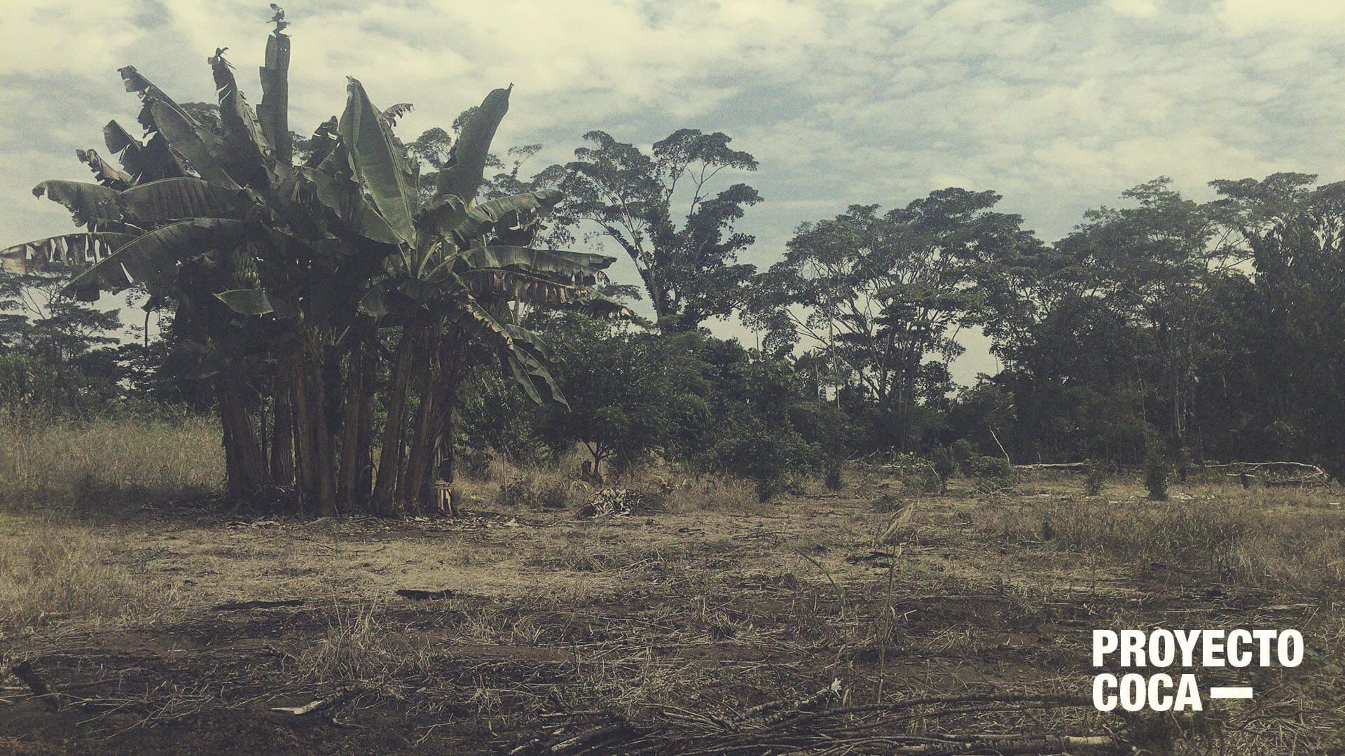 Sí: tenemos el récord de coca, pero la erradicación está funcionando