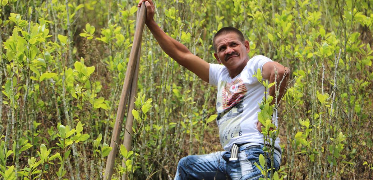 Fumigar con glifosato en Antioquia: ¿Un remedio peor que la enfermedad?