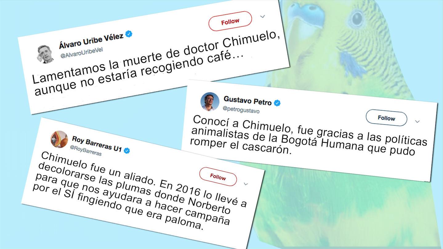 Si Chimuelo hubiera muerto en Colombia…