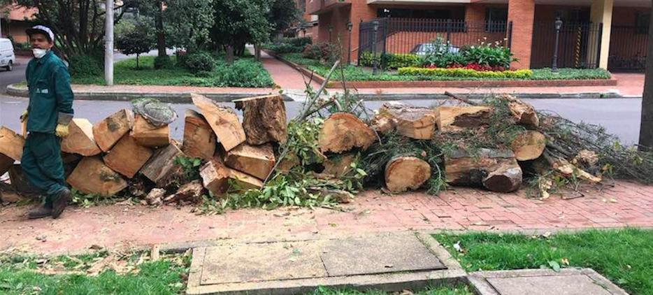Necesitamos más árboles en la ciudad y menos troncos en la Alcaldía