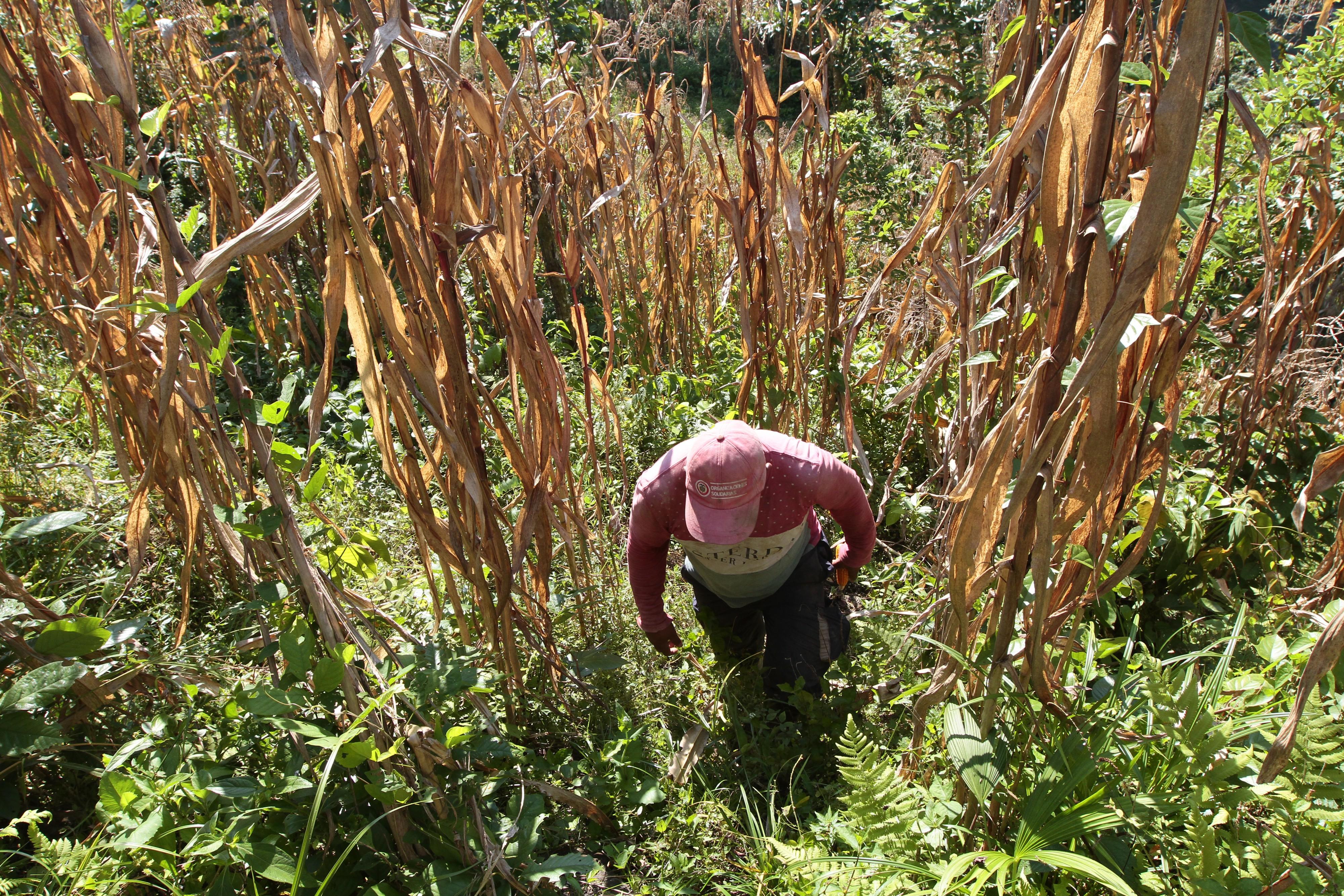 """""""Sin tierras no habrá paz"""": esta es la resistencia de los campesinos en Dabeiba"""