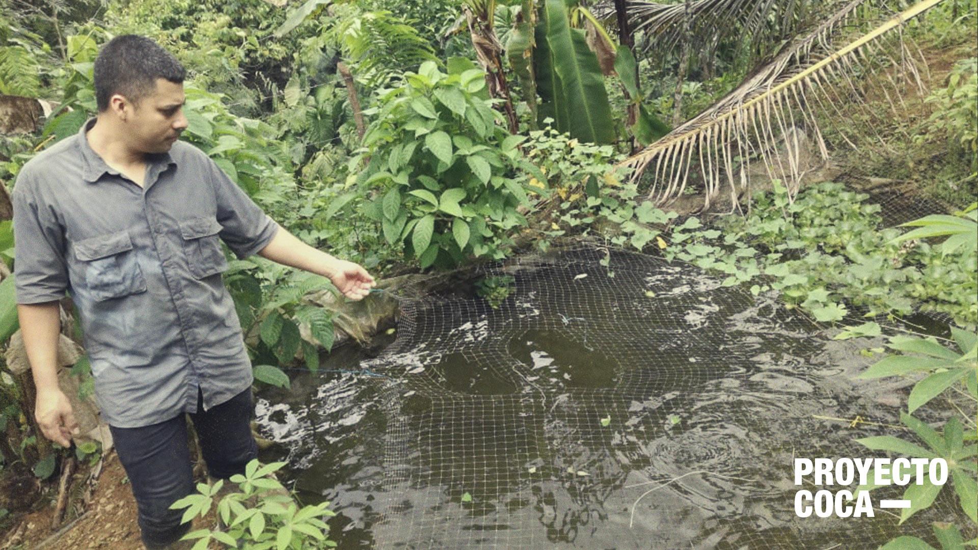 Con peces ornamentales, los campesinos del Valle están saliendo de la coca