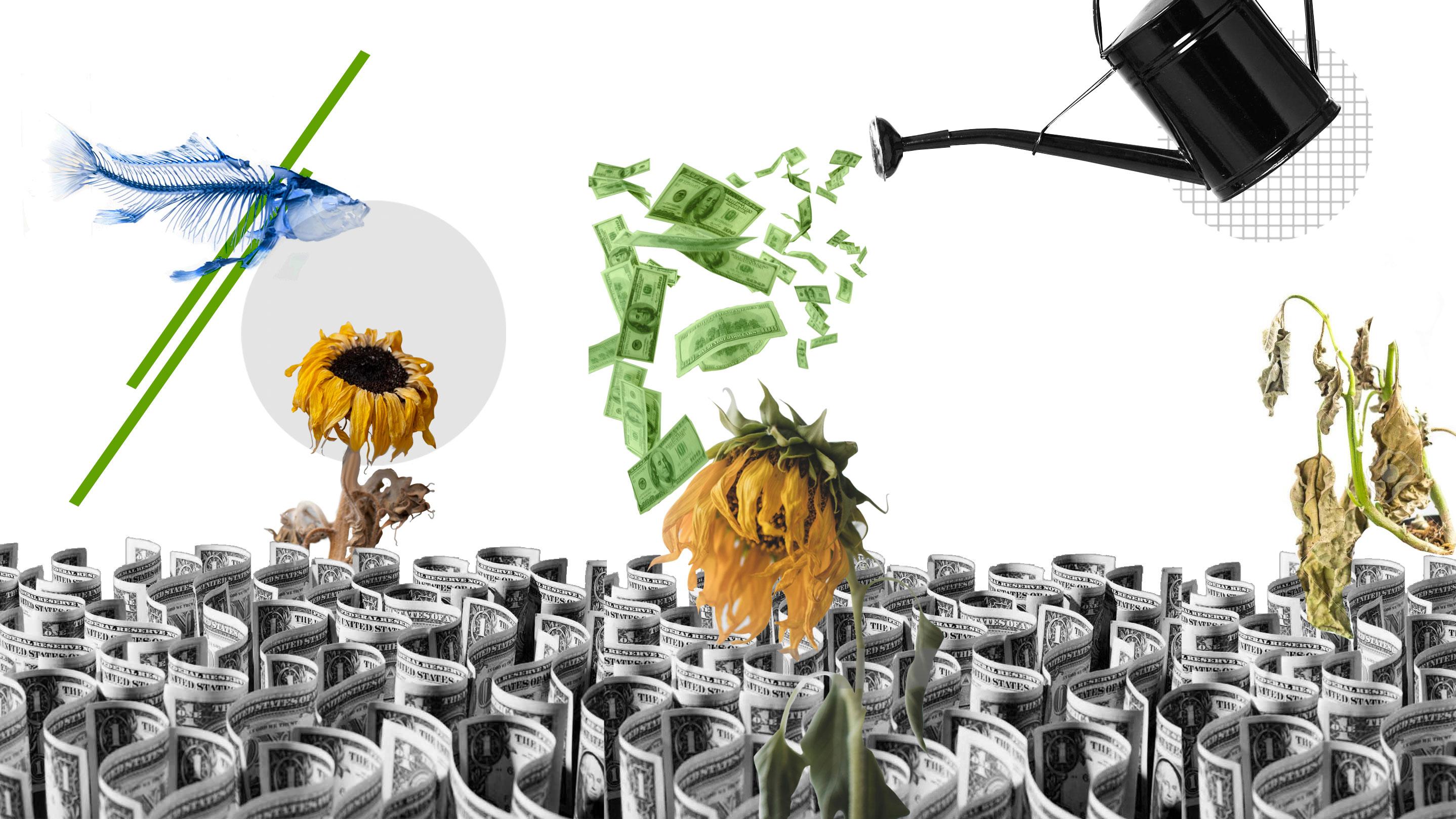 Amiga date cuenta: crecimiento económico y desarrollo no son la misma cosa