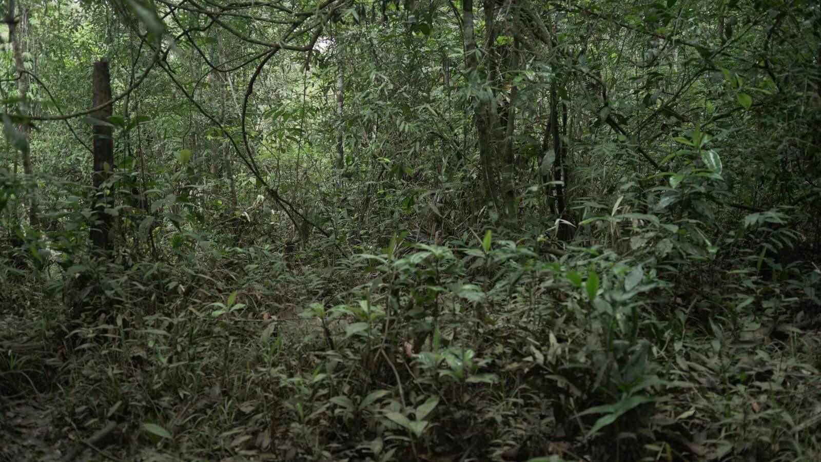 Fundacion Gaia Amazonas_Bosque _ Canela Reyes