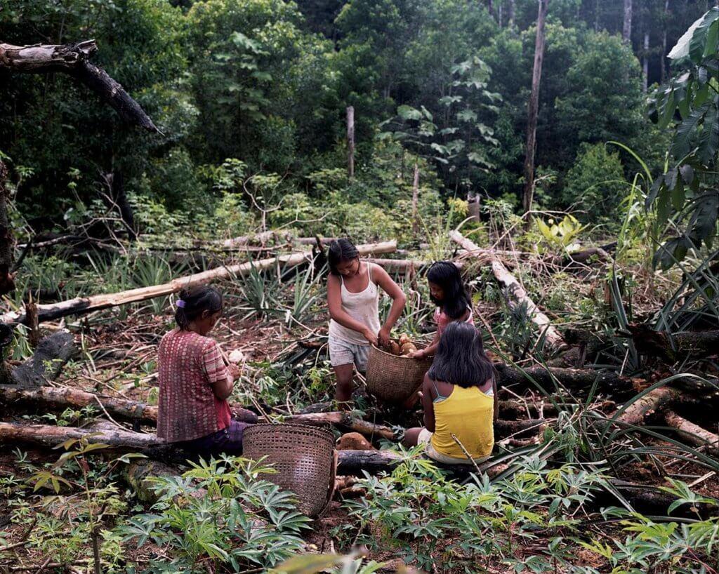 Fundacion Gaia Amazonas_Mujeres en chagra _ Stefan Ruiz