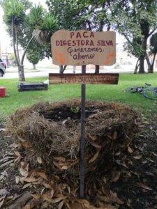 Paca_Tres