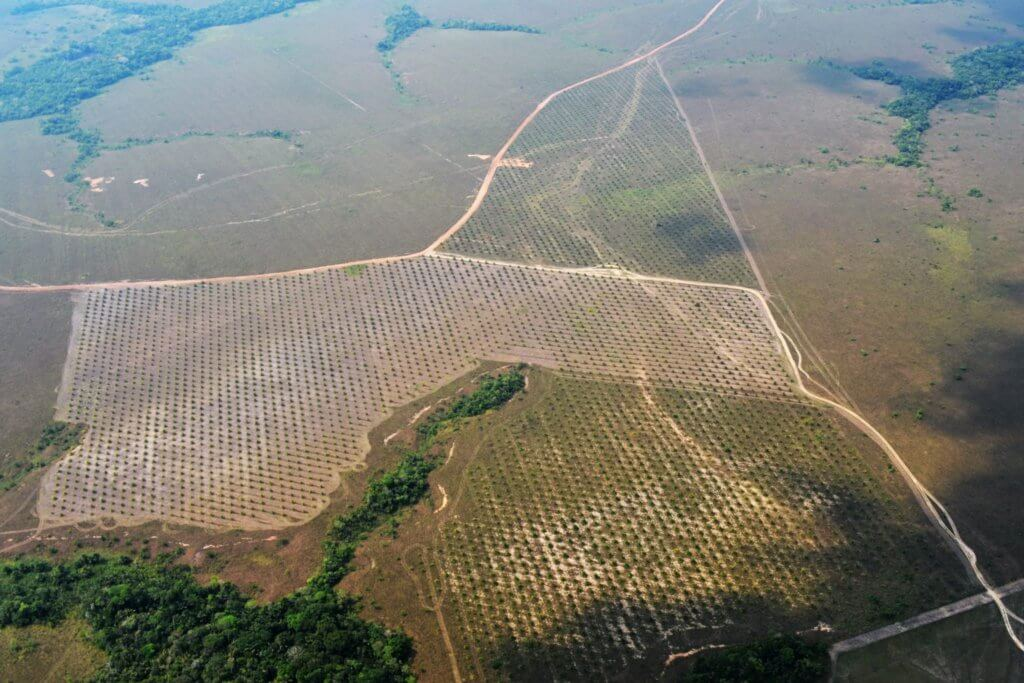 palma_ilegal_Guaviare