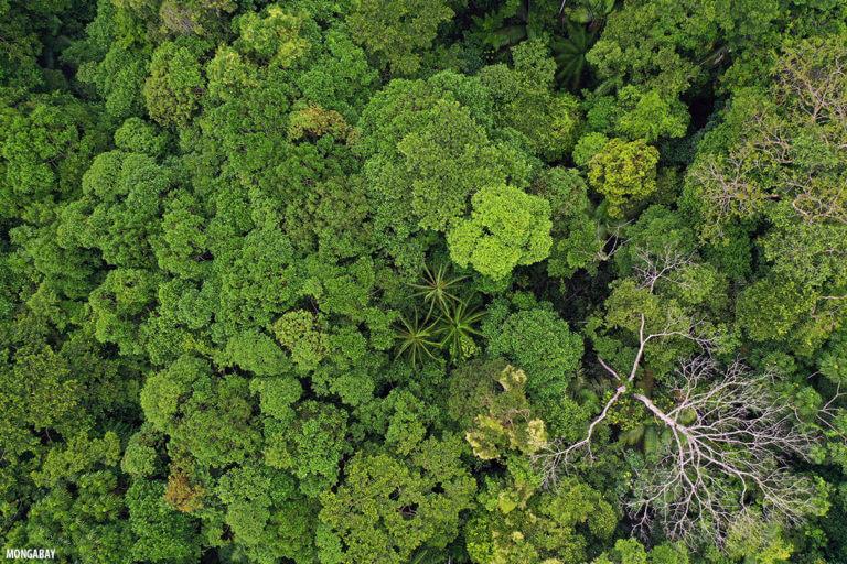 Amazonia colombiana. - Foto: Rhett Butler.