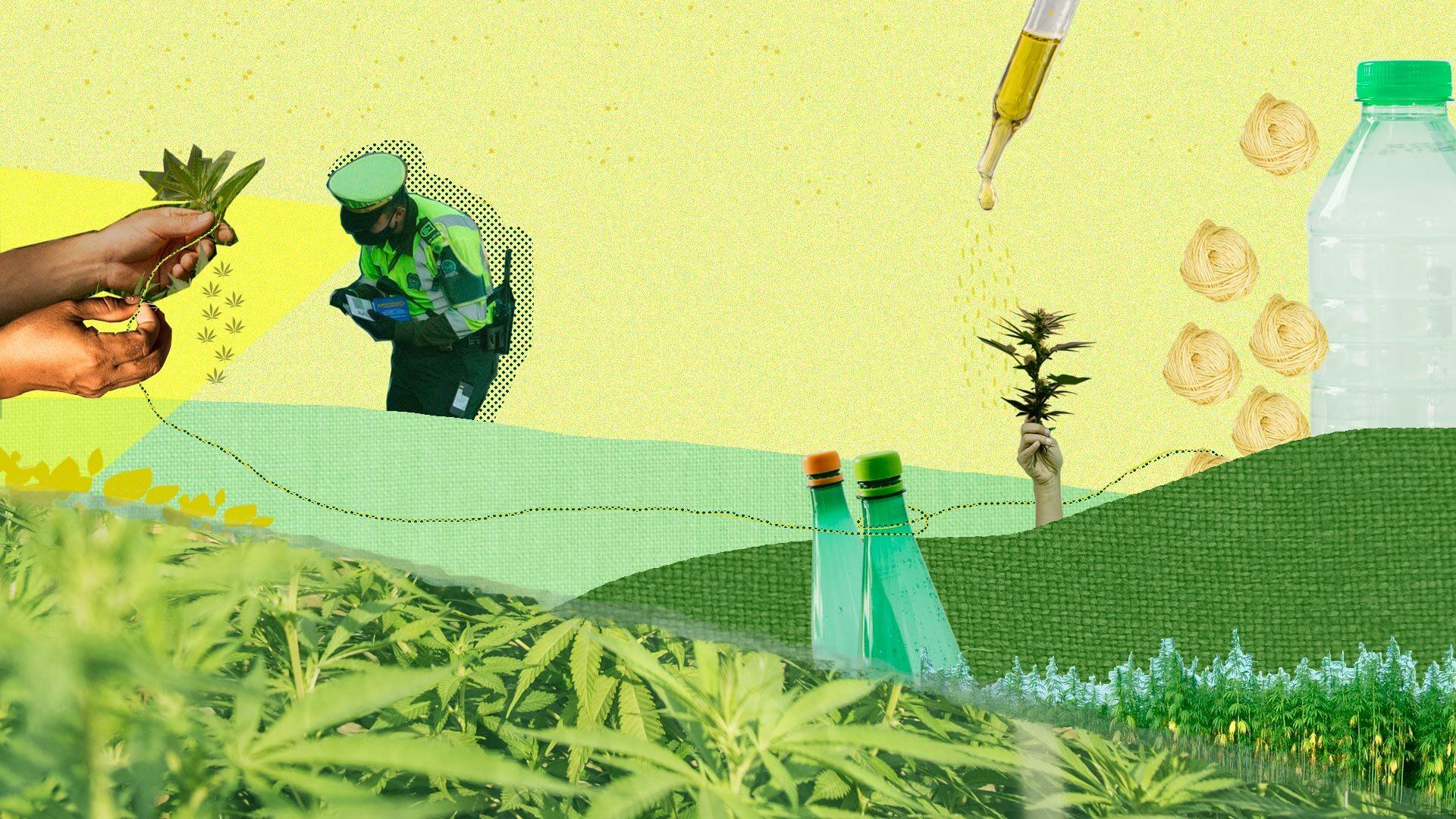 Cáñamo: el 'primo' del cannabis que industriales colombianos quieren transformar en textiles y biocombustibles